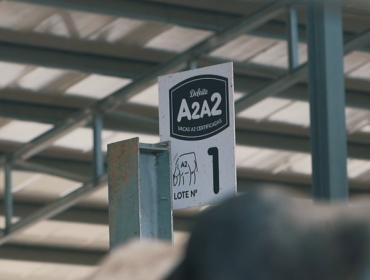 ¿Cómo la leche A2 está emergiendo en todo el mundo?