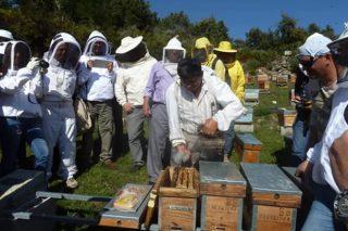 Tratamientos orgánicos combinados con manejo biotécnico, nuevas alternativas contra la varroa