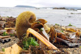 El Campus Terra desarrolla insumos agrícolas con algas marinas para cultivos en ecológico