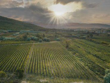 La DO Monterrei cosecha más de 6,2 millones de kilos de uva en la campaña 2021