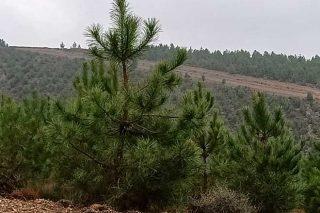 Jornadas divulgativas sobre gestión forestal sostenible y certificación del monte