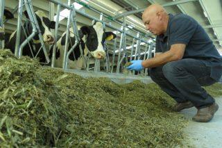 """""""Un buen silo de hierba es la forma más económica y razonable de subir la grasa en la leche"""""""