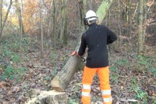 Recomendaciones preventivas de actuación ante árboles apoyadas enganchadas