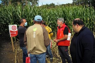 Mayor producción, calidad sanitaria de la planta y resistencia a la sequía: las variedades de maíz que vienen