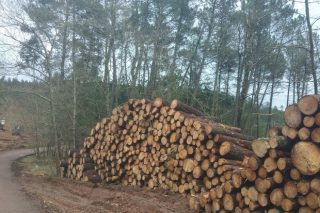 Taller sobre tramitación electrónica de las cortas de madera