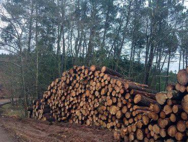 Timbertrack, el etiquetado de la madera desde el momento de su corta en el monte