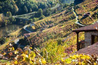Jornadas en la Ribeira Sacra sobre manejo hídrico y gestión de los viñedos con restos de esquistos